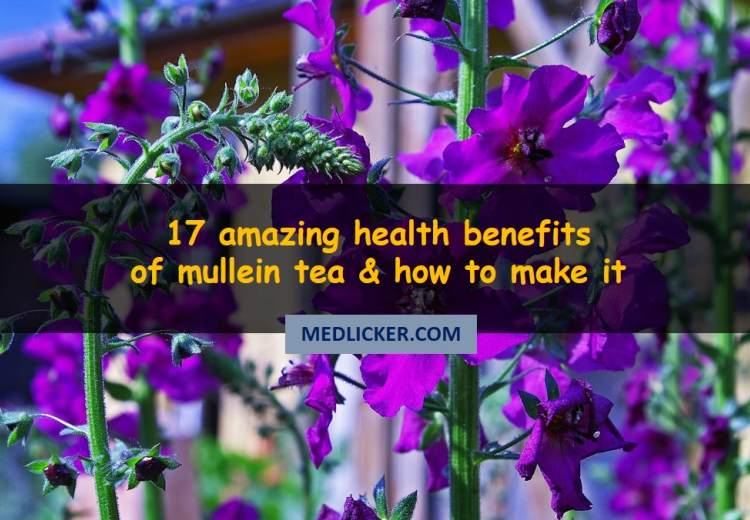 17 amazing benefits of mullein tea